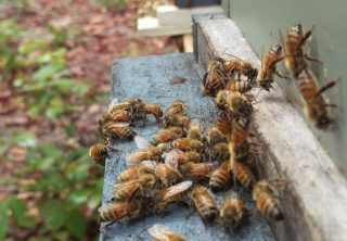 Sassafras Bee Farm Blog Picture