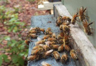 Sassafras Bee Farm Blog Picture