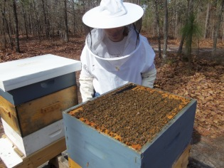 Bees in March