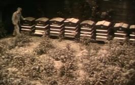 lubert-hives