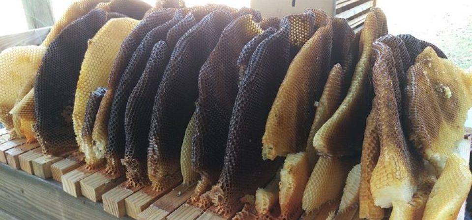 Beekeeping365