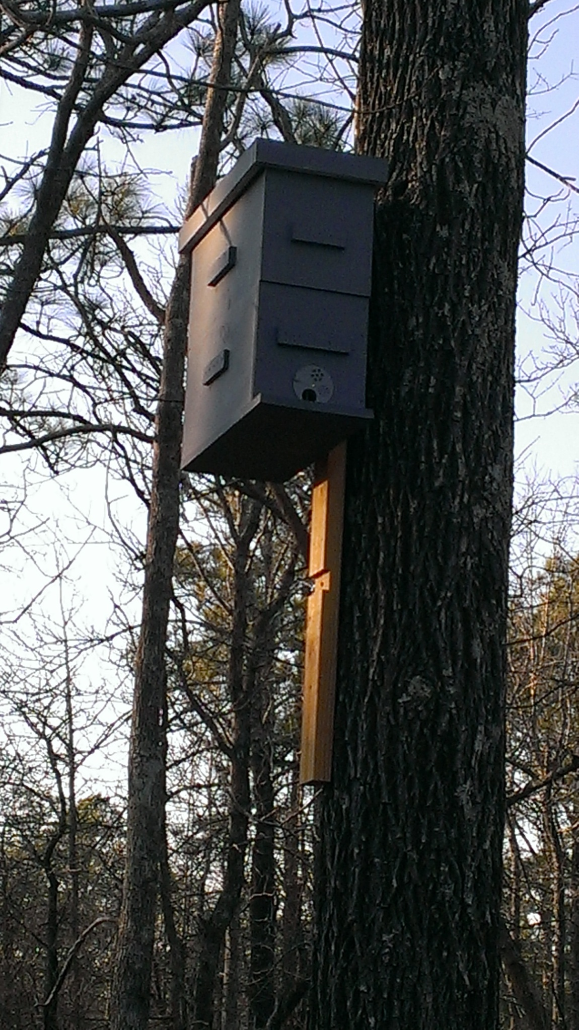Swarm Trap in tree