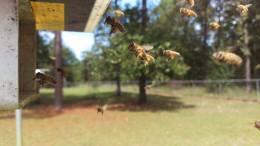 pollen2