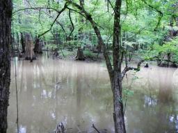 Figure 4: Cypress Swamp in CONG (Credit: D. Schuetrum)
