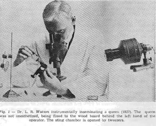 L.R.Watson